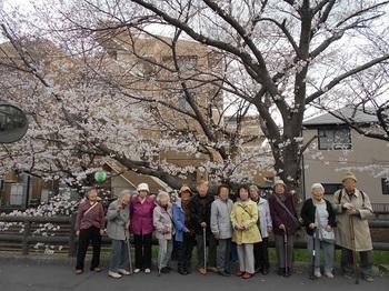 桜記念.JPG